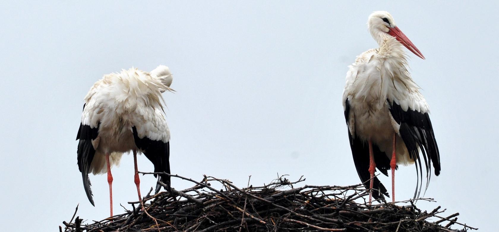 Die meisten Neuansiedlungen der Tiere gab es in diesem Jahr in Schwaben und Mittelfranken.