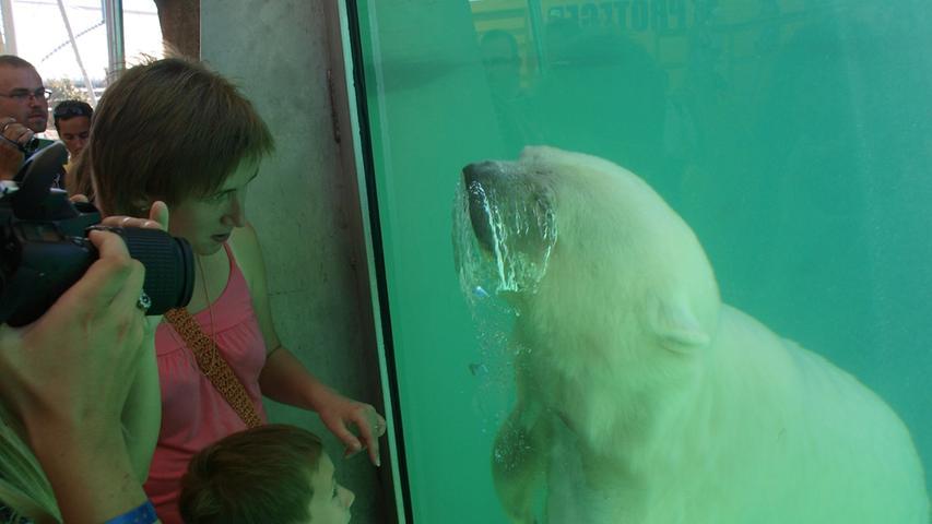 Bilder aus Antibes: Zu Besuch bei Eisbärin Flocke