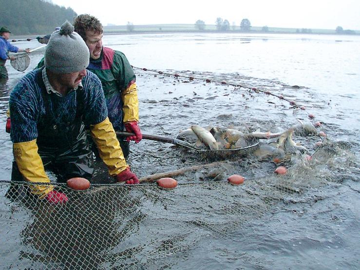 Im Landkreis Tirschenreuth (Oberpfalz) hat die Karpfenfischerei Tradition.