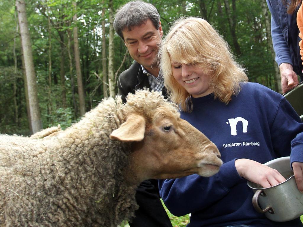 Julia Kestler, die gerade ein Freiwilliges Ökologisches Jahr absolviert, füttert mit dem bayerischen Umweltminister Markus Söder (CSU) im Tiergarten in Nürnberg Schafe.