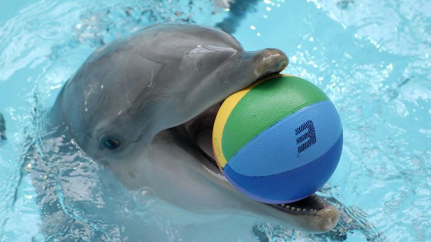 Am 26. Oktober 2007 fiel dennoch der endgültige Startschuss für Delfinlagune und Manatihaus im Nürnberger Tiergarten. Nachdem sich die Streitigkeiten monatelang hingezogen hatten, stimmte der Kulturausschuss mit klarer Mehrhheit für das 24 Millionen Euro teure Projekt.