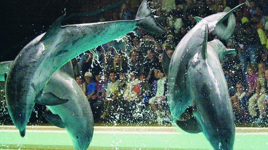 Seit Eröffnung  des Nürnberger Delfinariums vor 35 Jahren haben  elf Millionen Besucher die Vorführungen der Tümmler angeschaut. Im nächsten Jahr nimmt der Tiergarten die Lagune in Betrieb. Die Meeressäuger sollen in den neuen, 1500 Quadratmeter großen Becken mehr Bewegungsmöglichkeit haben.