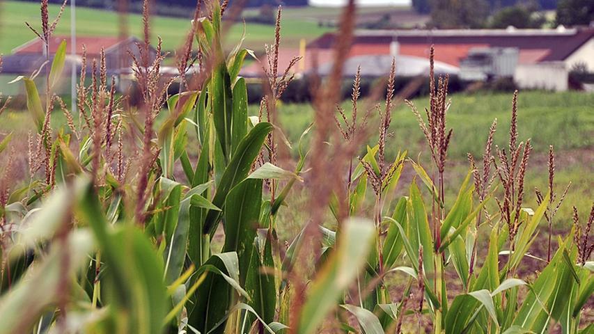 Bayerischer Bauernverband gegen Gentechnik