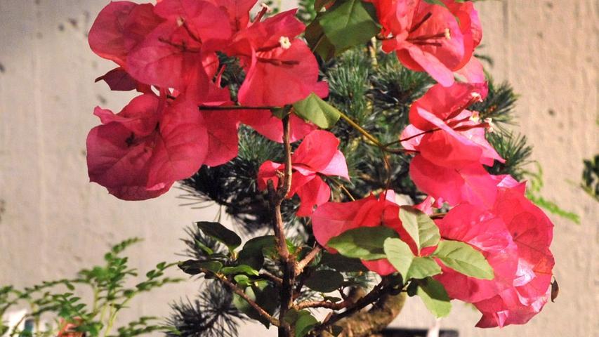 Die Minibäume stammen ursprünglich aus Asien und haben eine steile Karriere hingelegt - mittlerweile erfreuen sie sich auch in Europa großer Beliebtheit. Einen guten Bonsai gibt es ab circa 1500 Euro. Wer seinen Miniaturbaum zu pflegen weiß, darf sich auf ordentliche Wertsteigerungen freuen. Als teuerster Bonsai gilt der 900 Jahre alte Pinus Parviflora. Sein Preis: unglaubliche 900.000 Euro.