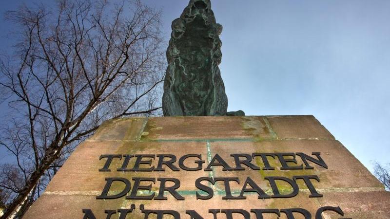 Vor 100 Jahren eröffnete der Tiergarten Nürnberg seine Türen am 11. Mai 1912. Mit zahlreichen Veranstaltungen wird das 100-jährige Jubiläum gefeiert.