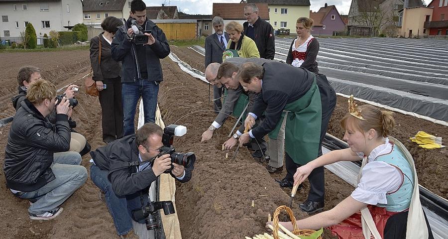 Spargelkönigin im Blitzlichtgewitter: Theresa I. sticht schon die ersten Stangen auf dem Acker der Familie Gugel aus Zirndorf/Wintersdorf. Unterstützung bekommt sie dabei von Politikern und Verbandsmitgliedern.