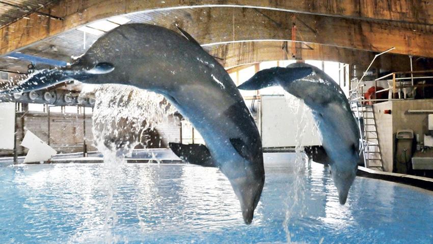 Kritiker der Delfinhaltung geschockt