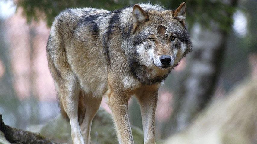 Bayern: Wo die wilden Tiere hausen