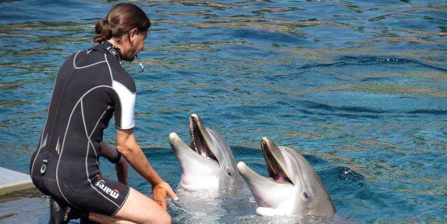 Nach einer achtstündigen Fahrt kamen die Meeressäuger Rocco und Kai im Juni aus dem holländischen Delfinarium Hardenwijk in Nürnberg an. Eine lange Eingewöhnungszeit brauchten die beiden Neuzugänge allerdings nicht, in der Lagune gibt es schließlich alles, was ein Delfin-Herz begehrt. Im Gegenzug ging Joker den umgekehrten Weg und durfte Hardenwijk sein neues Zuhause nennen.