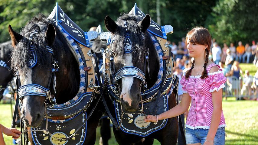 Heiße Pferde-Show auf dem Volksfest