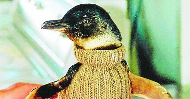 Nein, das Wort Pinguin gibt es selbstverständlich noch. Aber die Zeiten, in denenman den hübschen Pullover, den der Vogel hier trägt, Überschwupper genannt hat, sind definitiv vorbei.