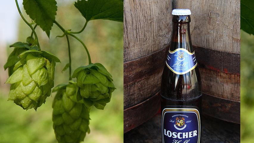Zu den bekanntesten Familienbrauereien im Aischgrund zählt definitiv die Brauerei Loscher aus Münchsteinach. Dies wird schon alleine dadurch ersichtlich, dass in Neustadt a. d. Aisch vor fast jedem Café oder jeder Bar ein Fähnchen mit dem Logo der Brauerei flattert. Das mittelständische Unternehmen bietet vom Export-Pils bis Schwarzbier so ziemlich jede Biersorte an, anders lässt es sich im überregionalen Geschäft gar nicht mehr mithalten. Viele Biere wurden bereits mit Awards wie dem Titel