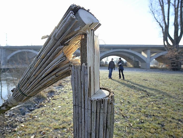 """Ein aufschlussreiches Schnittbild hinterließ der """"Baumfrevler"""" nahe der Siebenbogenbrücke in Fürth. Der Stamm wurde erst zur Hälfte angesägt und dann abgebrochen. Dasselbe Muster findet sich etwa auch bei den Berngauer Fällen."""