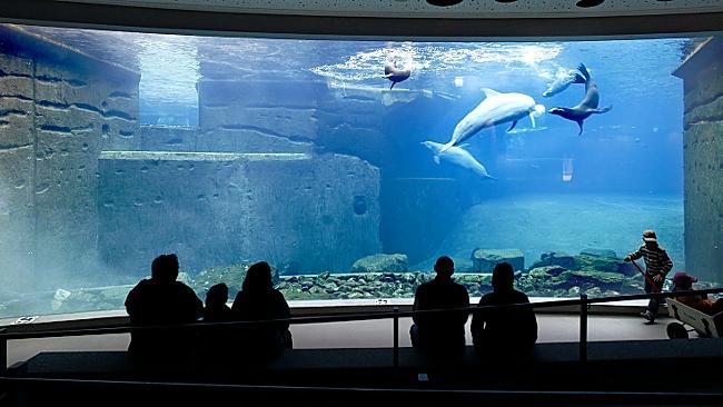 Das Nürnberger Delfinarium - gestern und heute