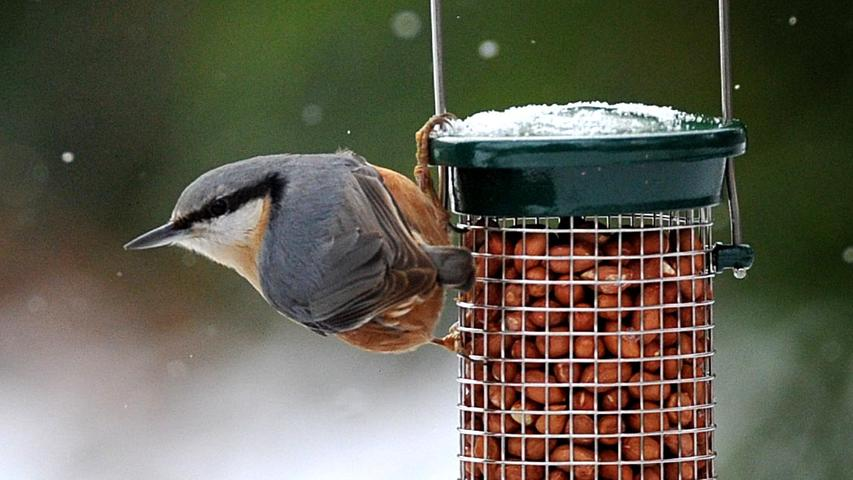 Wer zwitschert da? Die häufigsten Wintervögel in der Region