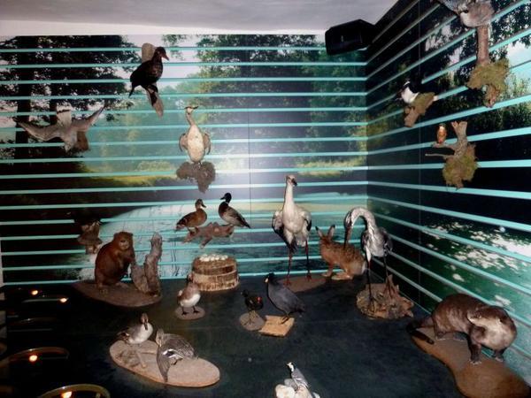 An einem multimedialen Diorama kann die Tierwelt  an den Teichen belauscht werden.
