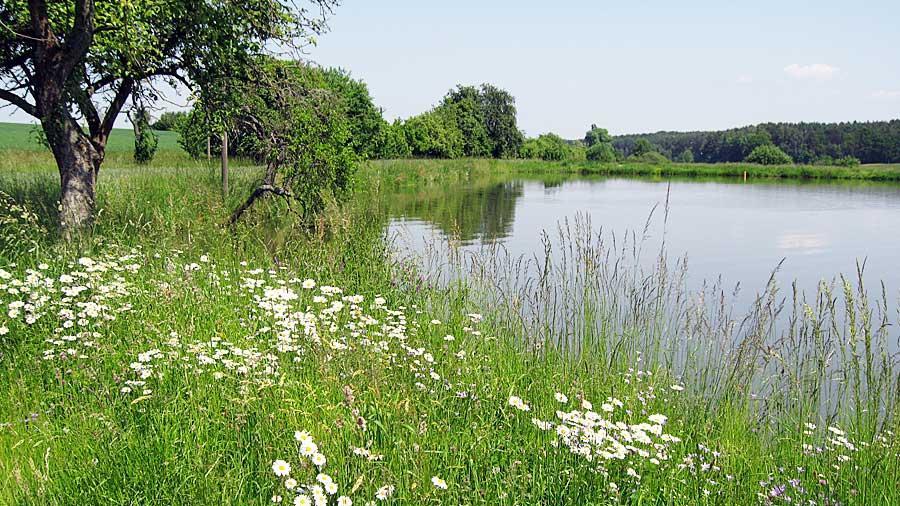 Geruhsam wandern lässt es sich entlang der zahlreichen Weiher, die die Landschaft rund um Oberreichenbach prägen. Seltene Wasservögel, farbenprächtige Amphibien und viele Blumen am Wegesrand erfreuen das Auge des Wanderers, der hier seine Kreise zieht.