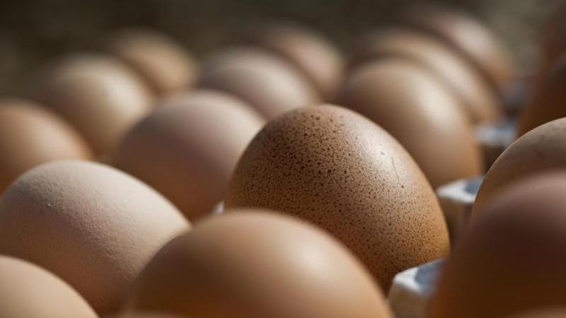 Lakto-Vegetarier meiden Fleisch, Fisch und zusätzlich auch Eier.