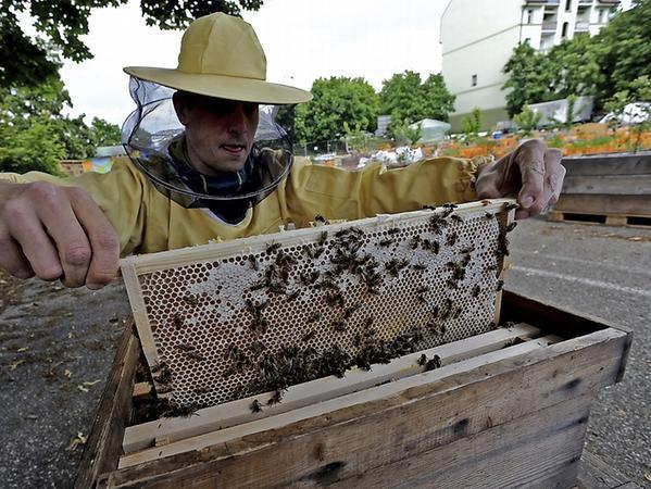 """Ian Bühler betreibt im """"Stadtgarten"""" auf dem alten Quelle-Parkplatz einen Bienenstock mit 40.000 Tieren."""