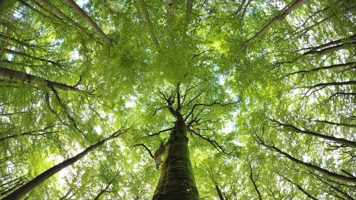 In Neuhaus wird der geplante Dolomitkiefernwalderweitert. (Symbolbild)
