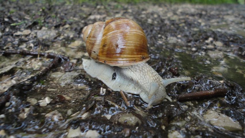 Für dieses Tierchen hieß es bei den steigenden Pegeln wohl: Tempo, kleine Schnecke!