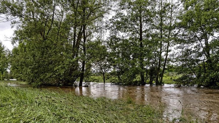 Normalerweise fließt das Wasser zwischen den Bäumen, nun stehen sie mitten im Bach.