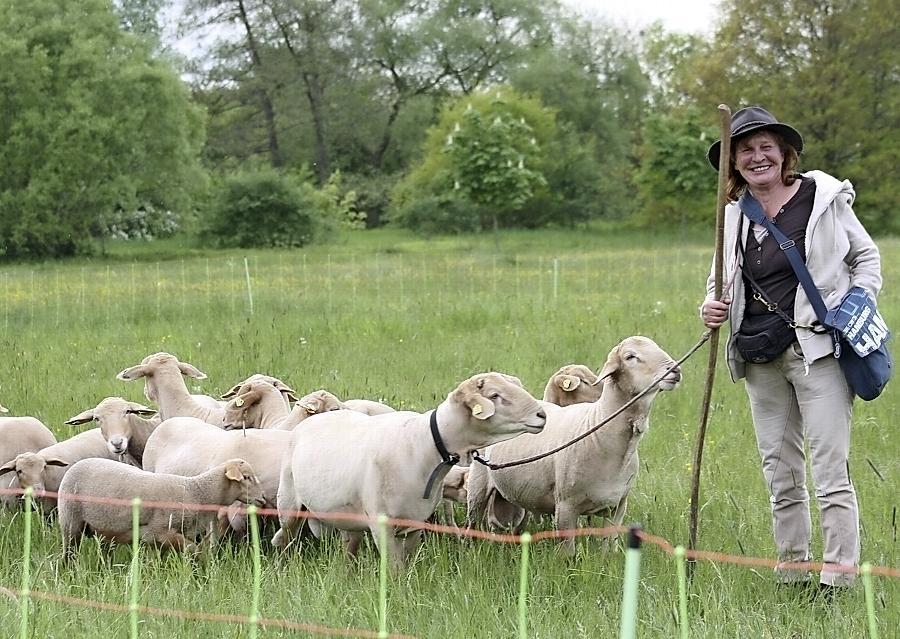 Heidi Stafflinger und ihre Rotkopfschafe im Rednitztal: Die Tiere beweiden die Wiesen und pflegen damit Biotope.
