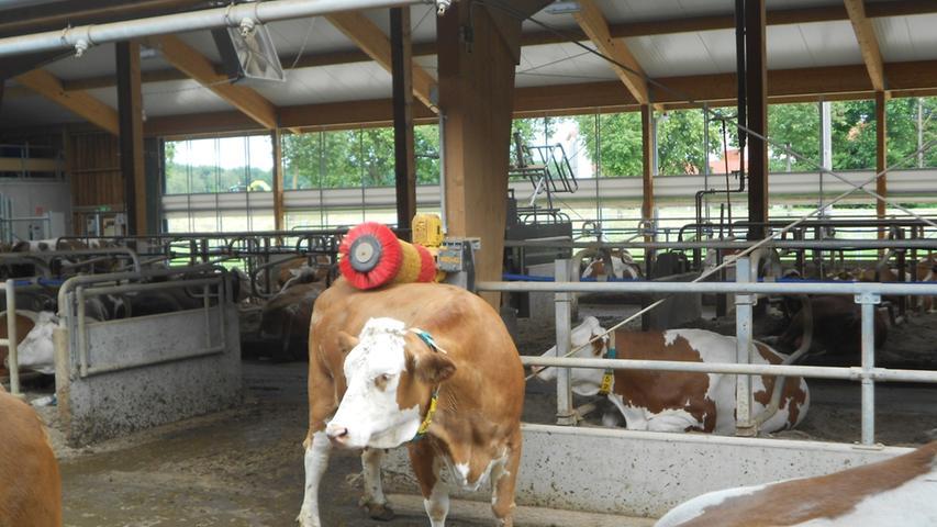 Die Bildungseinrichtung zeigt ihren Schülern, wie man Tiere artgerecht hält - etwa dass jede Kuh genügend Freiraum braucht.