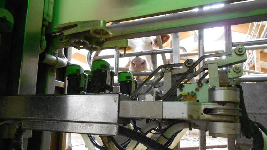 Kurz vor dem Tag der offenen Tür in den landwirtschaftlichen Lehranstalten in Triesdorf bei Ansbach hat sich die NZ dort einmal umgesehen - insbesondere im hochmodernen Wellness-Kuhstall.
