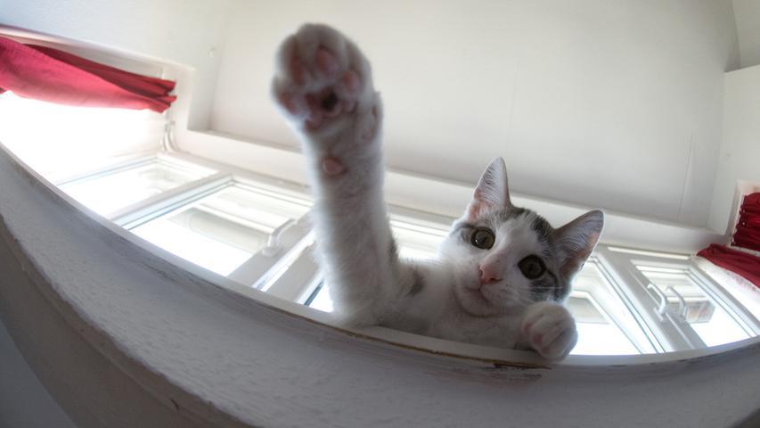 Zehn Gründe, warum Katzen besser sind als Hunde