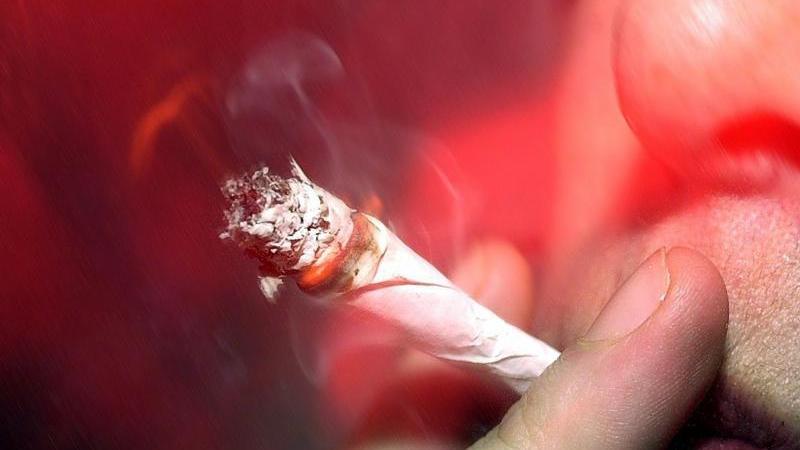 Beiden Altersgruppen gemein ist ein seit 2011 nahezu konstant verlaufener Anstieg mit dem Ergebnis, dass in der jüngeren Gruppe 6,6 Prozent in den letzten 12 Monaten Cannabis konsumiert haben, während es bei den älteren Befragten ganze 21 Prozent sind. Die Auswirkungen von THC auf den Körper variieren und reichen von einer intensiveren Sinneswahrnehmung, Halluzinationen bis dem Verlust von Raum- und Zeitgefühl und einer gewissen Antriebslosigkeit.   Es können aber auch beruhigende, entspannende und euphorisierende oder auch beängstigende Effekte auftreten. Bei regelmäßigem Cannabiskonsum kann es zu einer psychischen Abhängigkeit kommen. Außerdem leiden Konzentrationsfähigkeit und Gedächtnis, auch Lethargie und Depressionen werden dem Bericht der Drogenbeauftragten zufolge mit Cannabis in Verbindung gebracht. Anbau, Herstellung, Verkauf et cetera von Cannabis sind verboten. Seit 2011 ist Cannabis in Deutschland jedoch für medizinische Zwecke verschreibungsfähig.