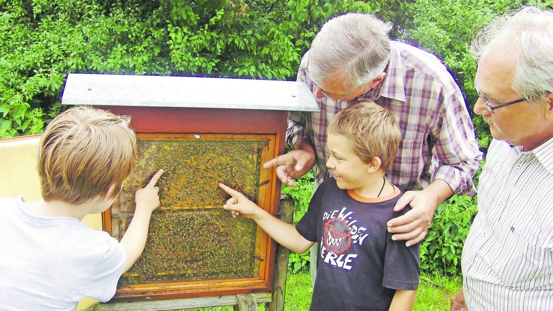 Schon Kinder können am Kreislehrbienenstand alles über Bienen und die Imkerei erfahren.