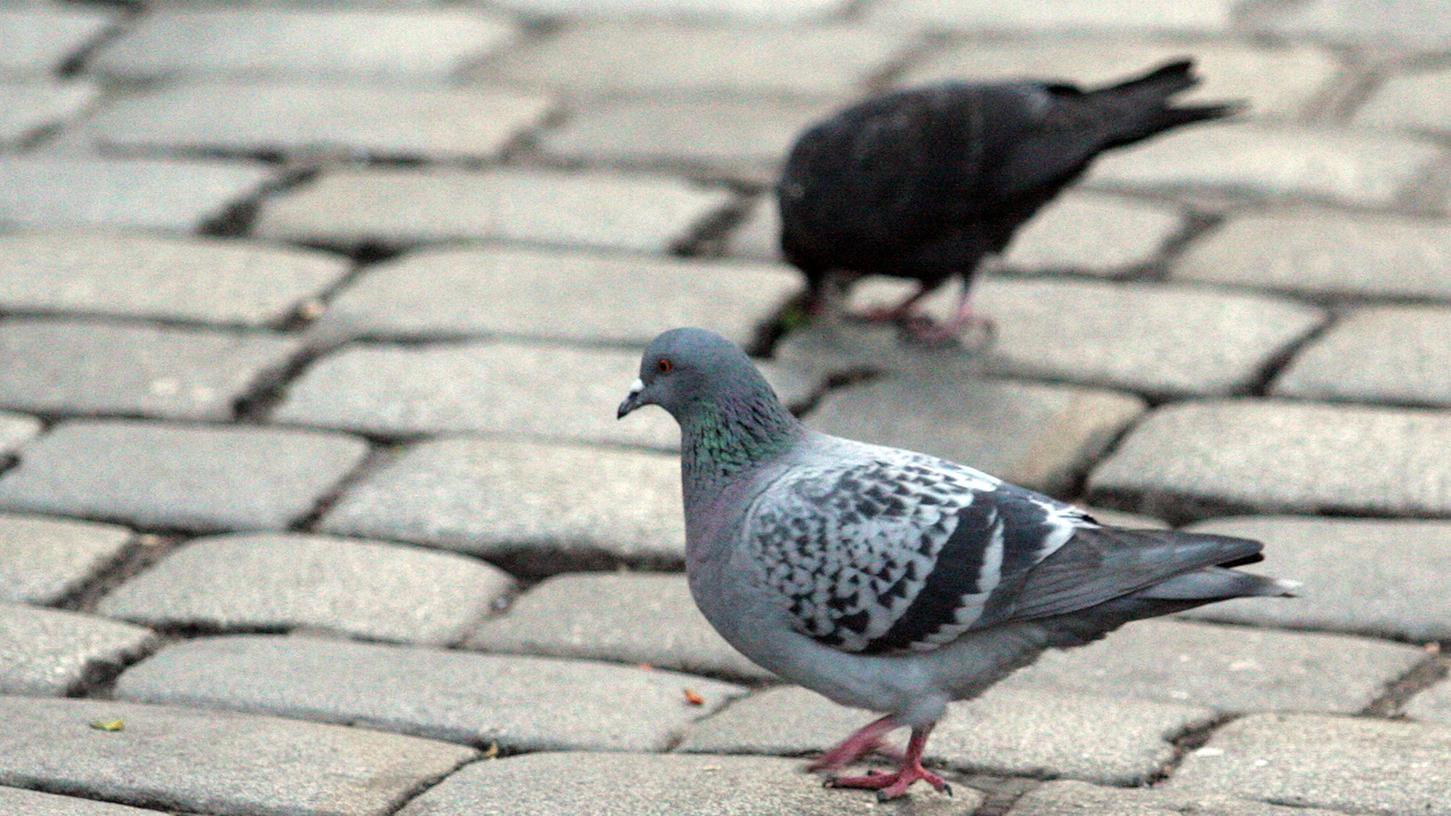 Tauben gehören zum Stadtbild. Doch des einen Freud ist des anderen Leid. Die Stadt will die Taubenpopulation verringern.