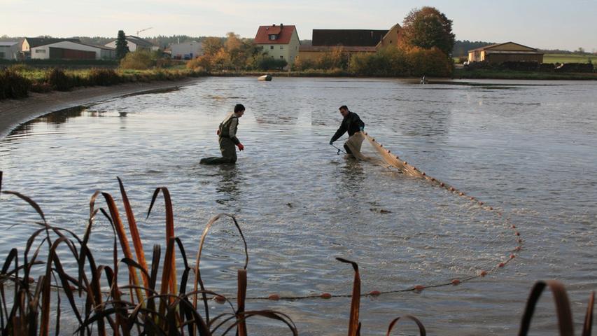 ...einem ausladenden Fischernetz trieben die Frischmanns ihre Karpfen zusammen und...