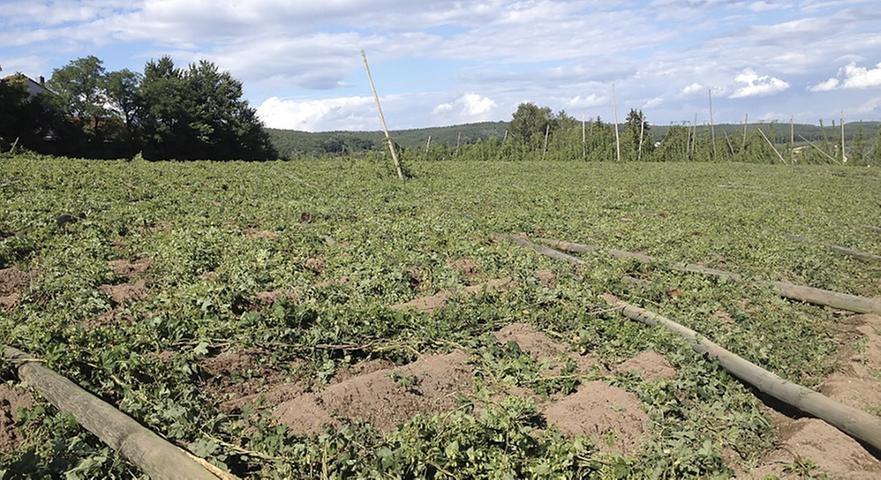 2013: Wetterkapriolen setzten Landwirten zu