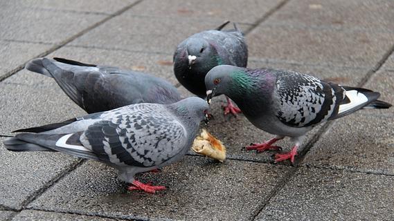 Weil sie Tauben fütterte: Frau landet in Franken vor Gericht