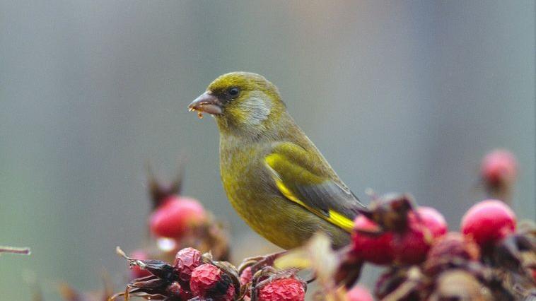 Wintervögel in der Region: Die Fotos unserer User