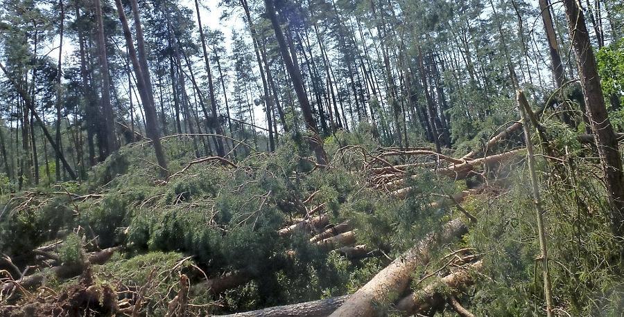 Waldbesitzer hatten 2013 mit Wetter-Unbill zu kämpfen