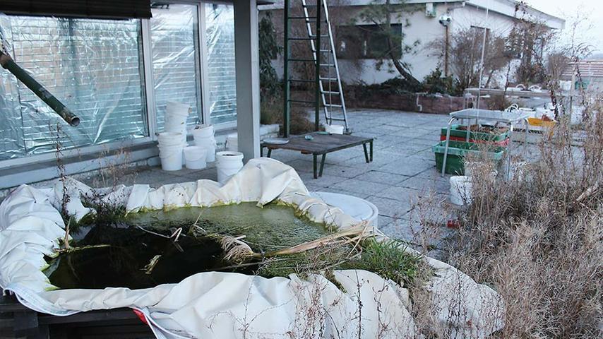 Sogar ein kleiner Teich wurde angelegt.