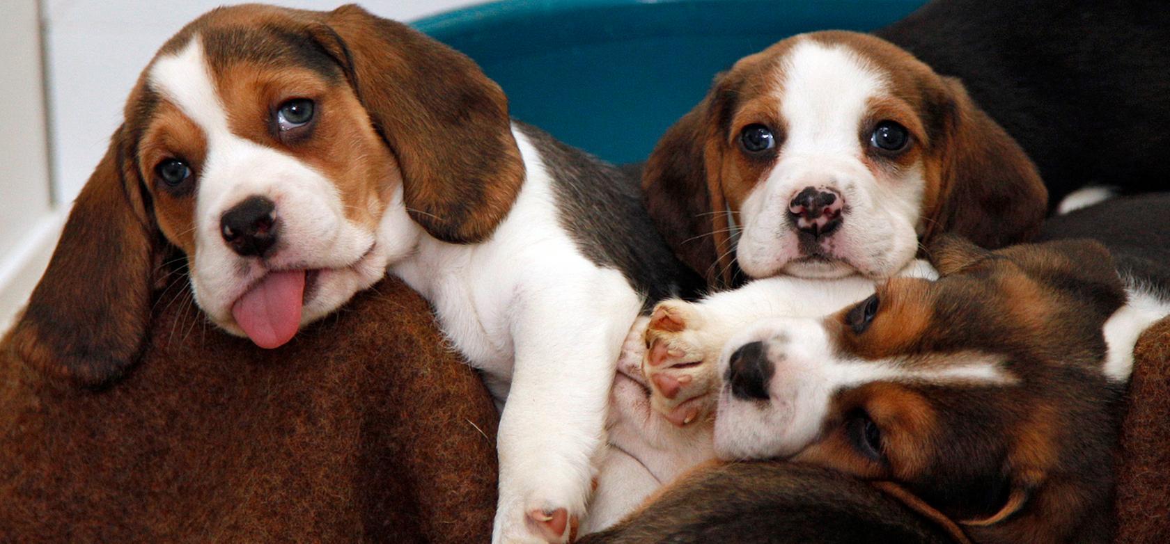 Im Nürnberger Tierheim landen immer wieder Tiere aus Tiertransporten. (Symbolbild)