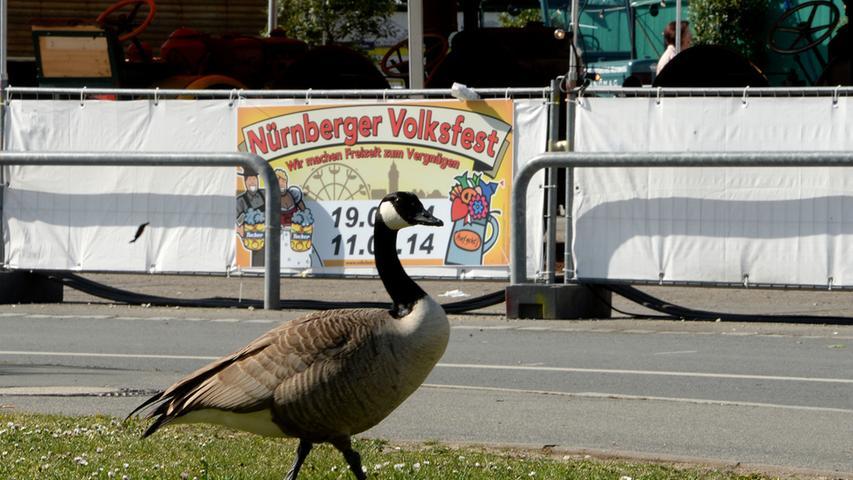 Dieses Spektakel will sich selbst der ein oder andere tierische Besucher keinesfalls entgehen lassen.