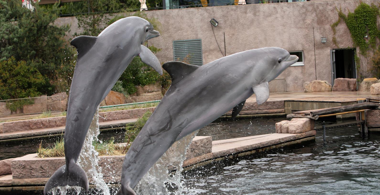Die Delfine im Tiergarten haben jetzt zwar in der Lagune mehr Platz zum Schwimmen, ziehen jedoch nicht so viele Besucher an, wie erhofft. Nun greift die Stadt Nürnberg dem Tiergarten finanziell unter die Arme.