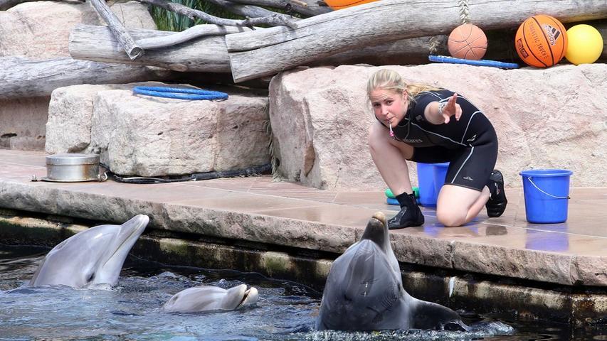 Tierpfleger berichteten aus der Praxis und über ihren Zugang zu den Delfinen.