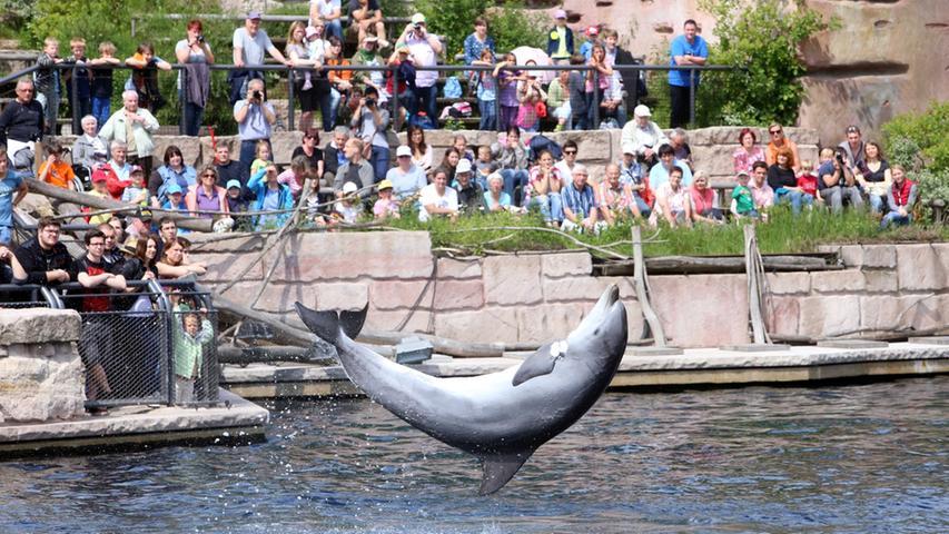 Infotag in der Lagune: Aus dem Leben eines Delfins