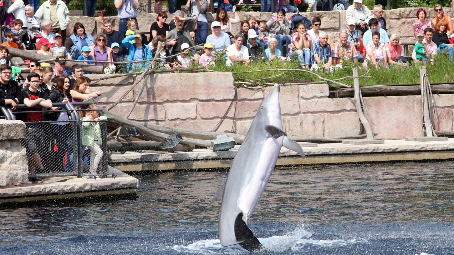 ProWal fordert unter anderem einen Sonnen- und Wetterschutz für die Delfine und Besucher.