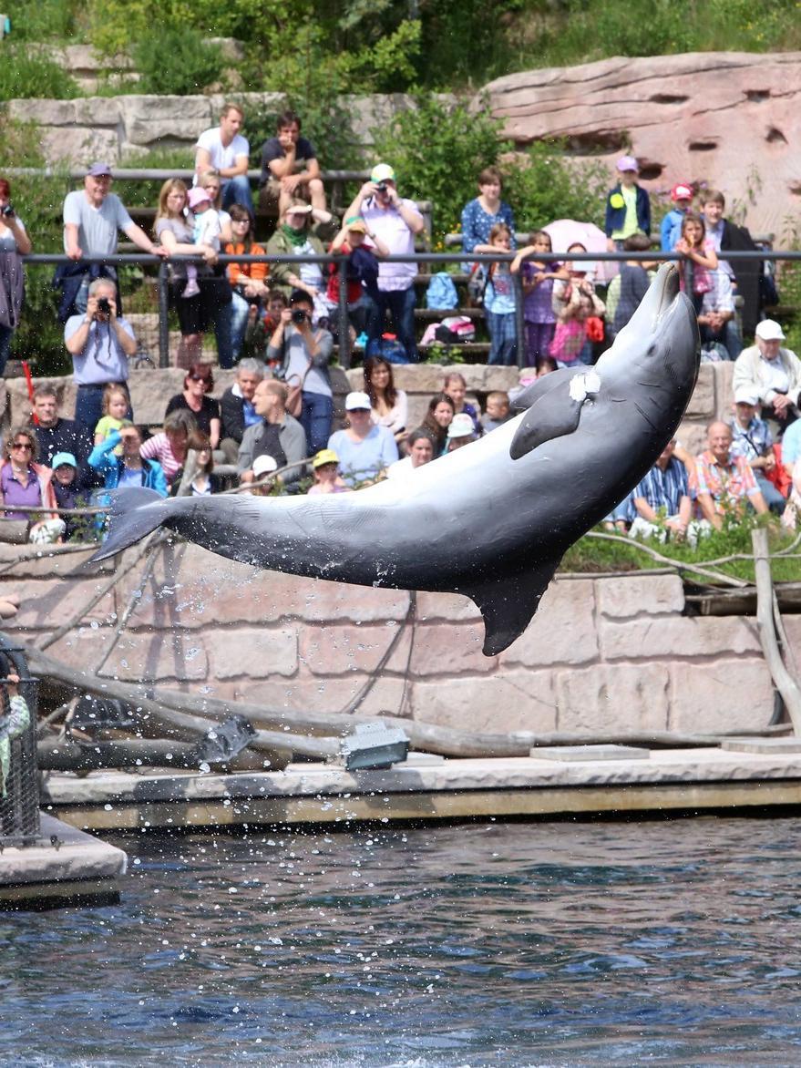 Beim Infotag der Delfinlagune haben die Besucher alles Wissenswerte über das Leben der Tümmler im Tiergarten Nürnberg erfahren können.