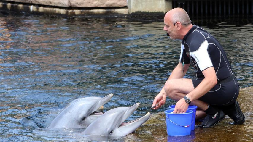 Und natürlich standen die Delfine im Mittelpunkt.