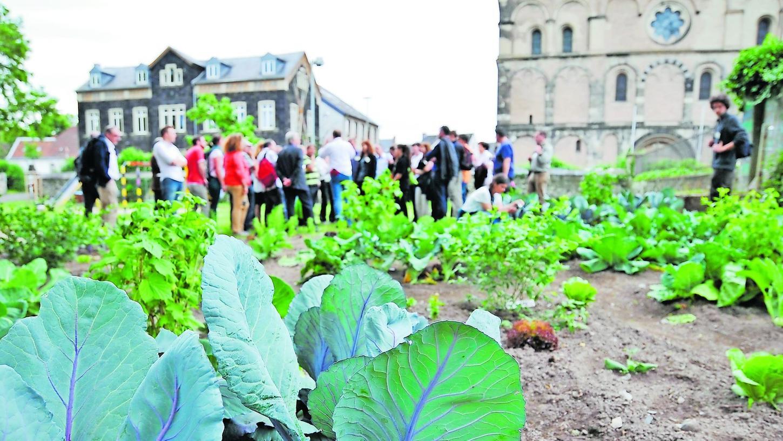Auch am Mariendom in Andernach stößt man auf Gemüsebeete. Wer möchte, darf sich hier bedienen.