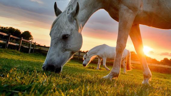 Gehöriger Schreck: Autofahrer touchiert Pferd