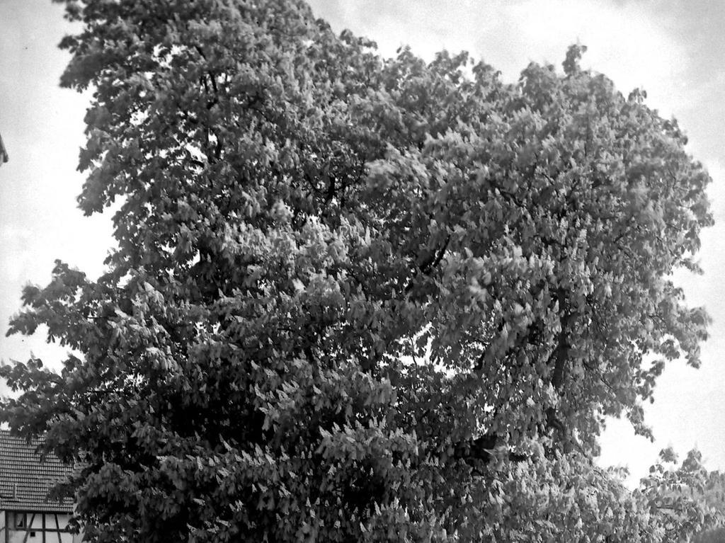 Historisches Foto, aufgenommen von Wilhelm Heinz ca. 1930 in der Fränkischen  Schweiz, digitalisiert von Max Legien hier: Kohlmannsgarten